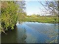 TM3389 : River Waveney upstream of Falcon Bridge by Adrian S Pye