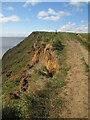 TA2369 : Erosion  on  the  Headland  Way by Martin Dawes