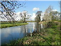 TM3490 : River Waveney upstream of Wainford Mill by Adrian S Pye