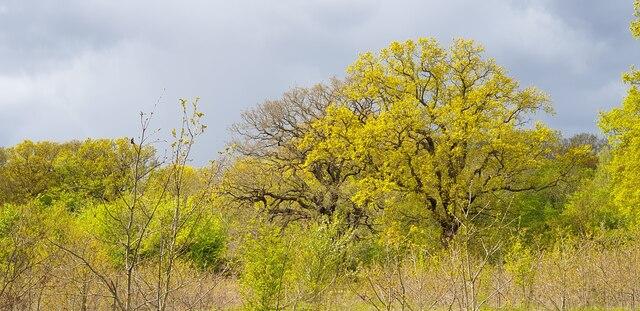 Spring Colours in Oakwood Park, London N14