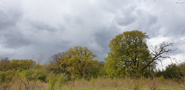 Spring Colours with storm clouds in Oakwood Park, London N14