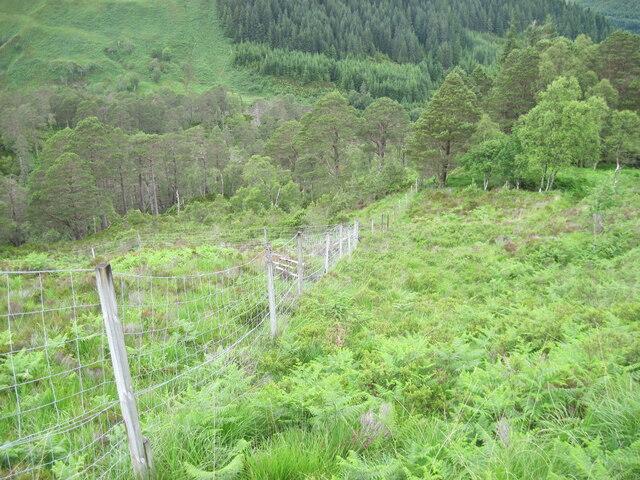 Deer fence towards Golden Valley