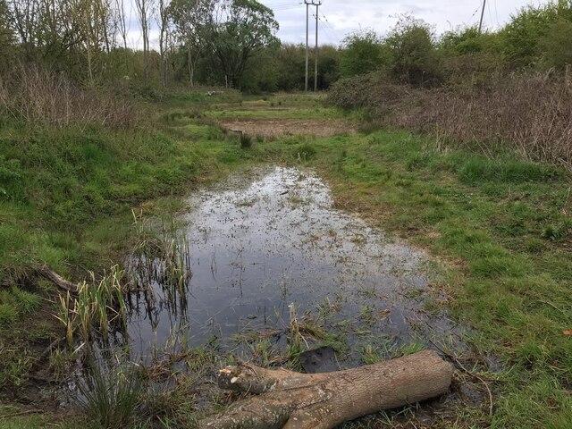 A few wildlife ponds