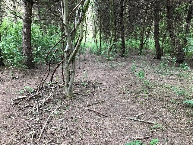 An ex-bushcraft shelter