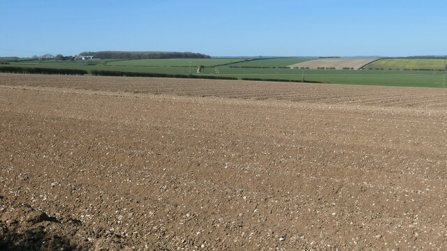 Bare field at the northern end of Wad Dale
