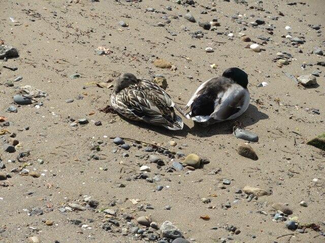 Let sleeping ducks lie?