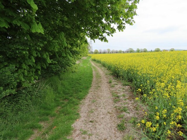 Bridleway to Cholsey