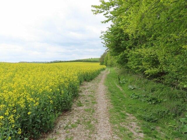Bridleway to Lollingdon