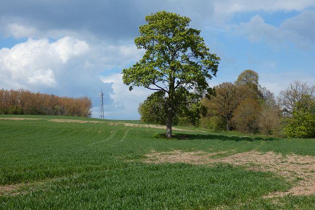 Farmland, Thatcham
