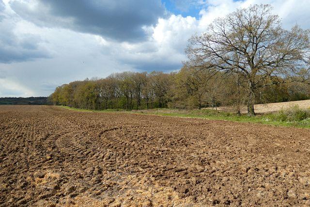 Farmland, Shaw
