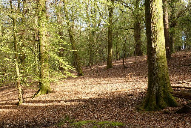 Woodland, Hermitage