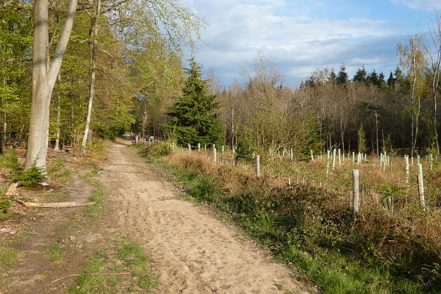 Woodland, Bucklebury