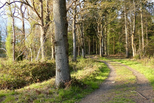 Fence Wood, Hermitage
