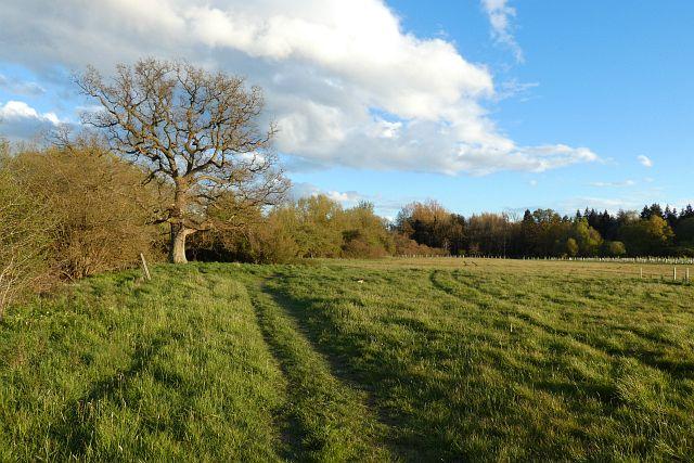 Meadow, Heckfield