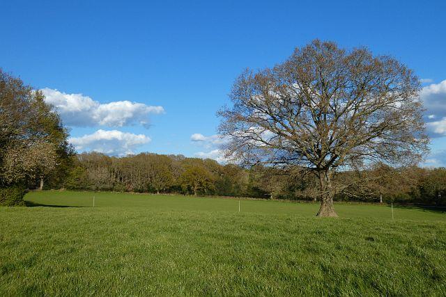 Pasture, Mattingley