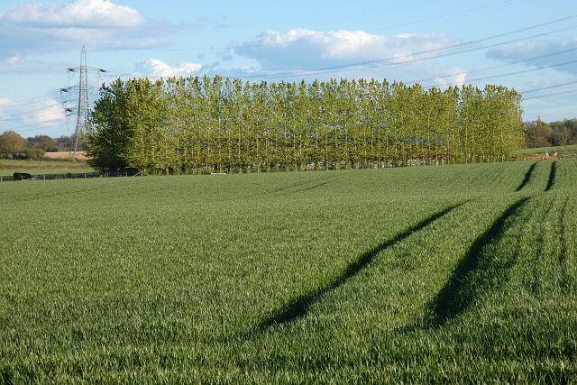 Farmland, Rotherwick