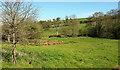 SX9279 : Valley. Ashcombe by Derek Harper