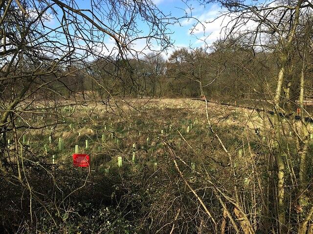 HS2 enabling works, Crackley-Burton Green, March 2021 (5)