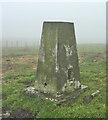 NH8066 : Gallow Hill Trig Point Flush Bracket S8446 by thejackrustles