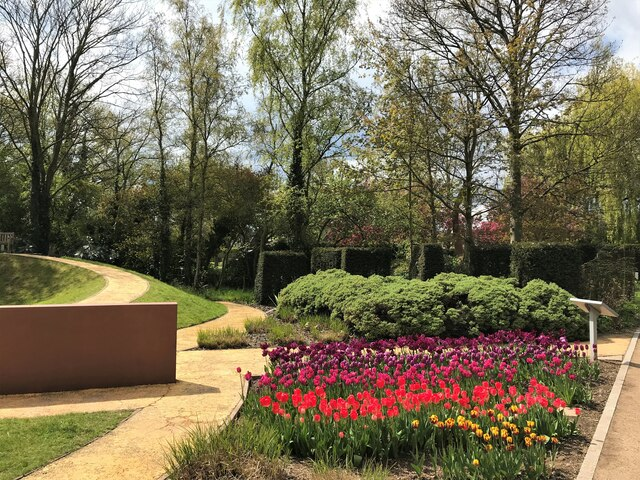 Tulips in flower at Springfield Gardens, Spalding