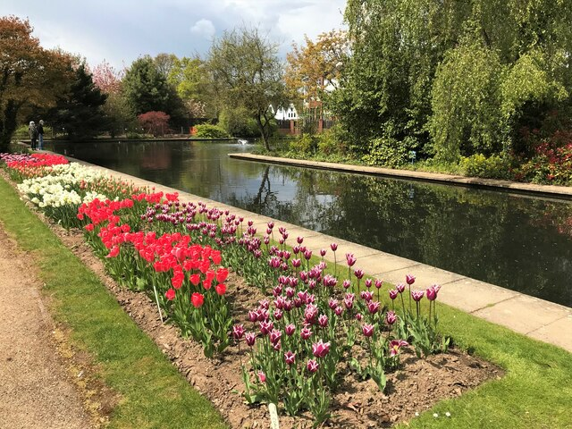 Tulips and water feature at Springfield Gardens, Spalding