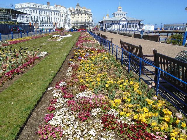 Carpet Gardens May 2021