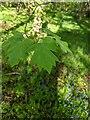 TF0821 : New foliage by Bob Harvey