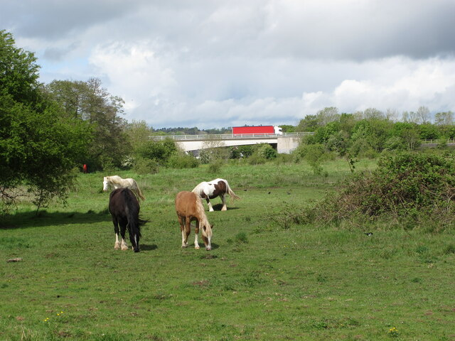 Horses on pasture by Thames, view to elevated A404