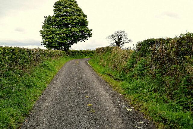 Tree along Ballykeel Road