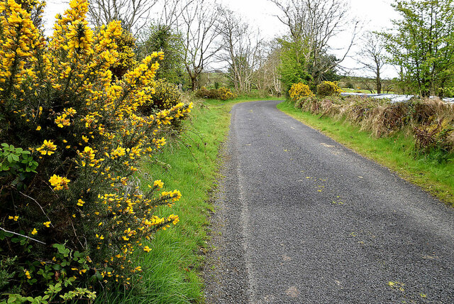 Whins along Ballykeel Road