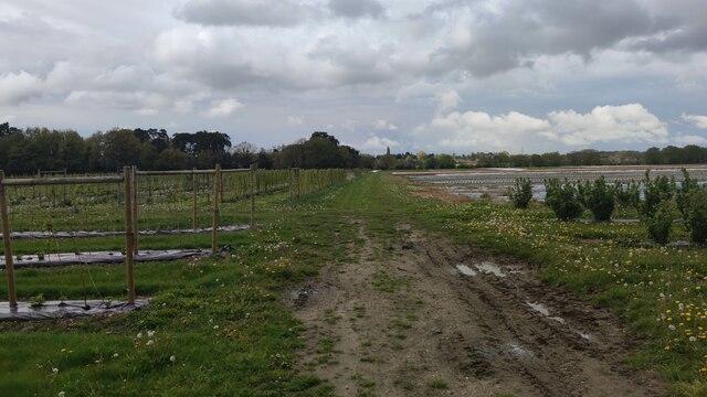 Various crops on Grays Farm
