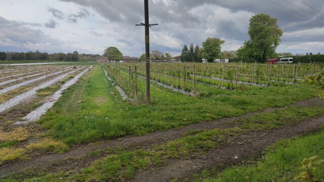 Grays Farmhouse on edge of field