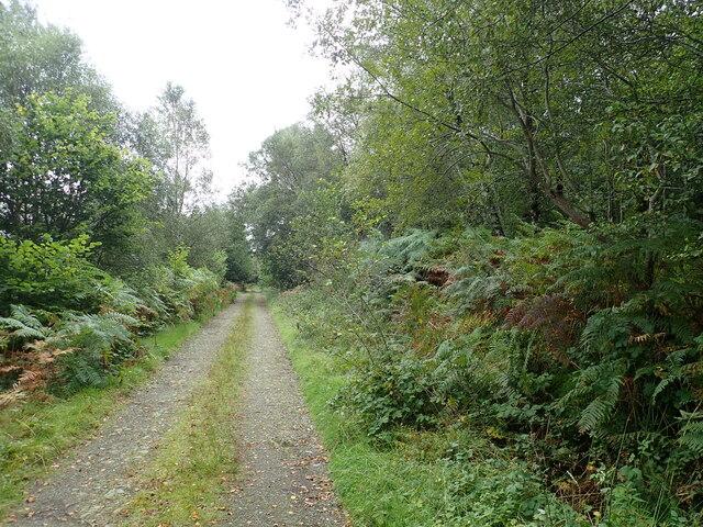 Woodland path to Torosay