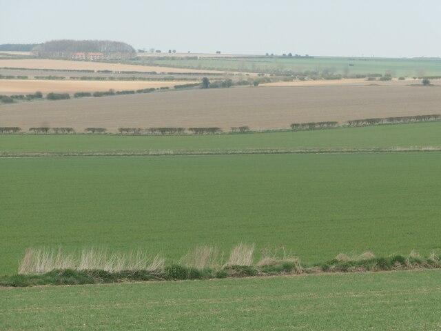 Chalk landscape, south of Blealands Nook