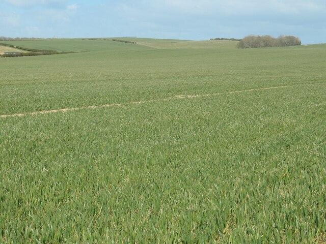North Field, Flamborough