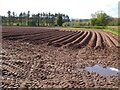 SO1433 : A field planted with potatoes by Philip Halling