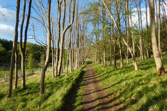 Woodland, Stonor