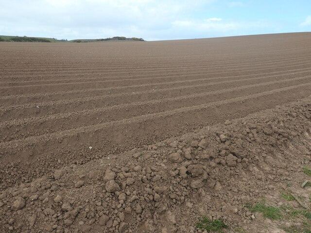 Ploughed field, North Cliff, Flamborough