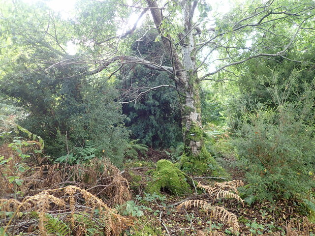 Fenella's Wood