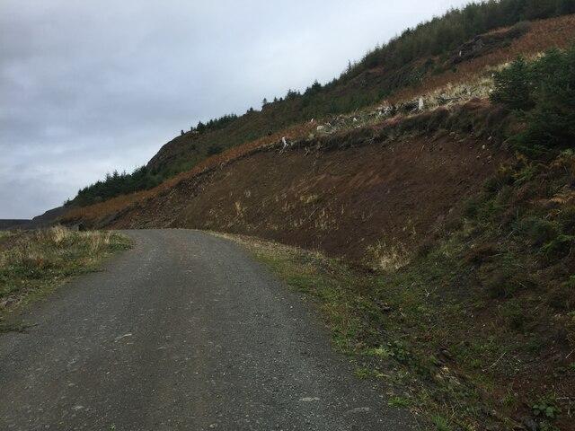 Forest road, Loch Frisa