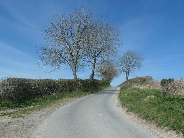 Trees along the lane to Goodmanham