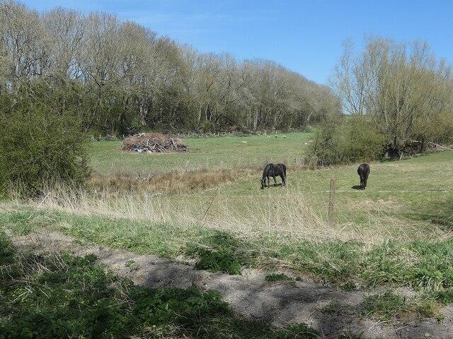 Wooded embankment, Market Weighton - Driffield railway