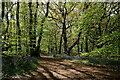 TQ2658 : Banstead Wood by Peter Trimming