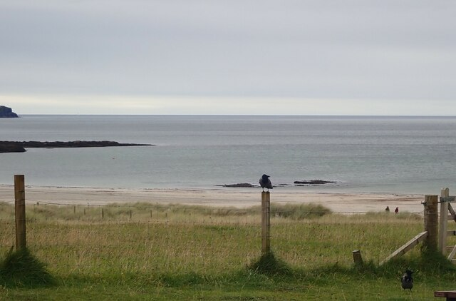 Hooded Crow on a fence post, Calgary Bay