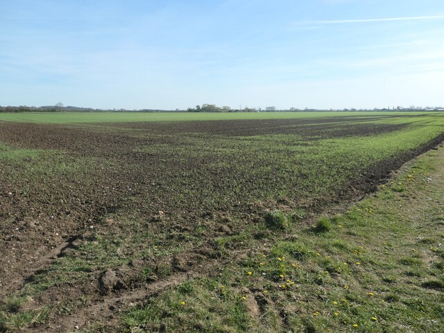 Weighton Common, looking south