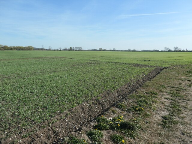 Emerging crop, Weighton Common