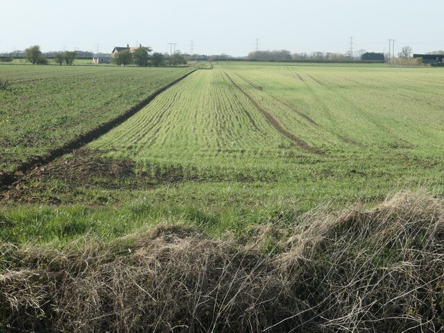Two crops on the north bank of Weighton Beck