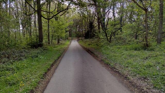 Driveway in Wytham Wood