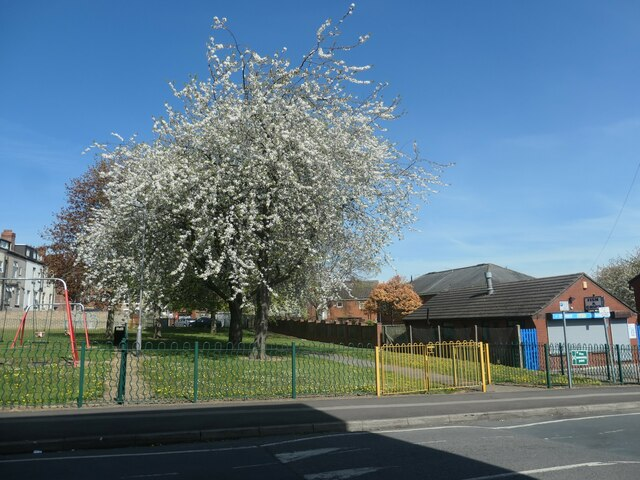 Blossom time on Lower York Street, Wakefield