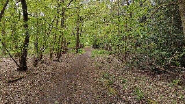 Path nearing Cuckoo Lane
